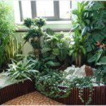 высокорослые растения на балконе