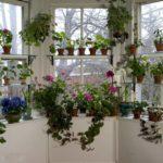 вариант размещения растений на балконе