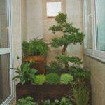 Фото 8 обустройство зимнего сада на балконе или лоджии