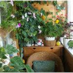 вариант обустройства балкона цветами