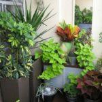 растения на лоджии