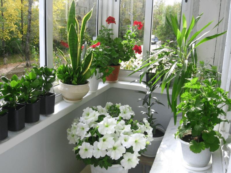Большой балкон: варианты идеального оформления и дизайна (60+ фото)